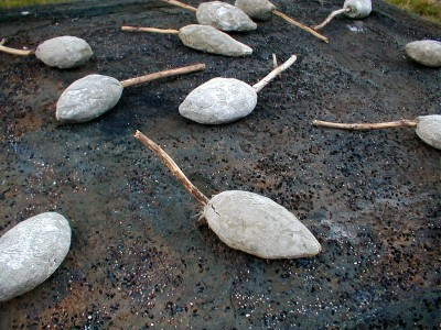Concrete Seedpods