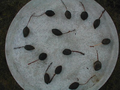 Seedpod Sculpture Concrete